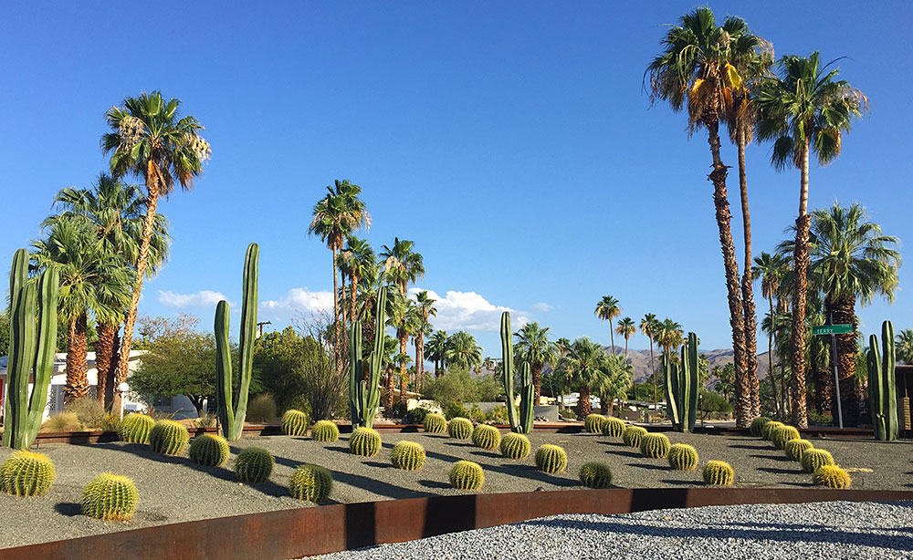 Example of barrel cactus in Palm Springs, CA