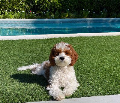 Dog friendly hotels in Palm Springs, CA